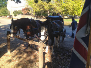 And, yes, you can take a carriage ride in Colonial Williamsburg.